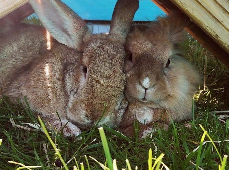 Roxy + Hamish
