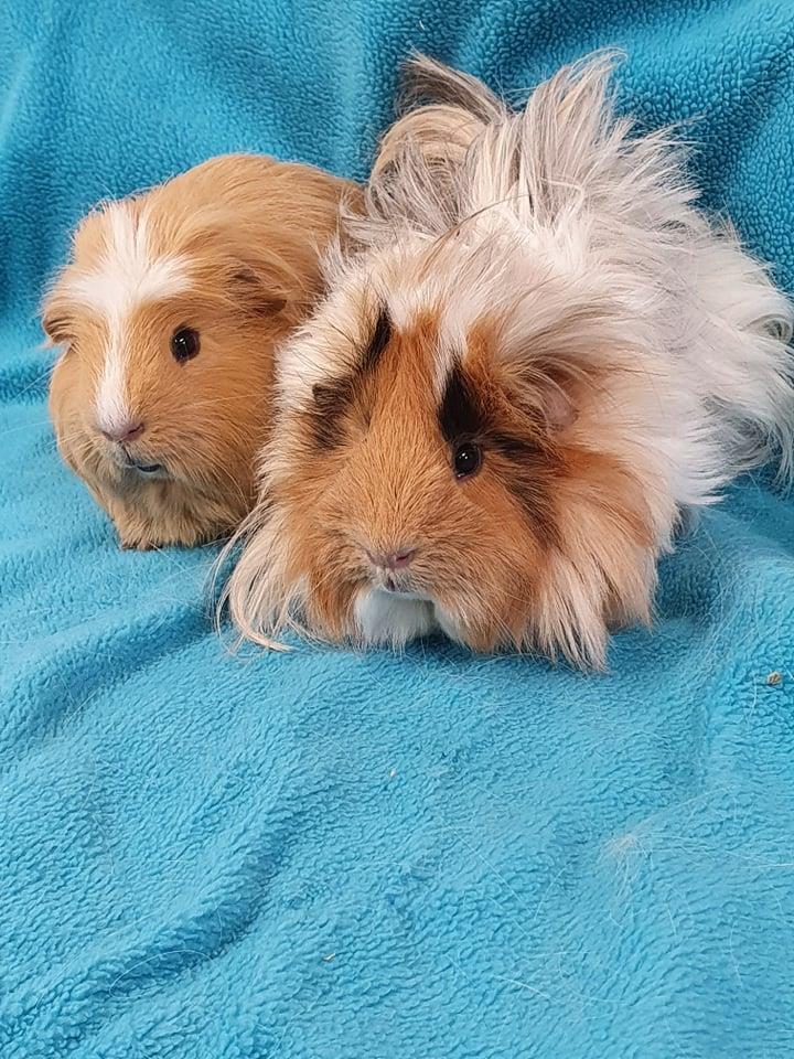 Gomez & Pugsley
